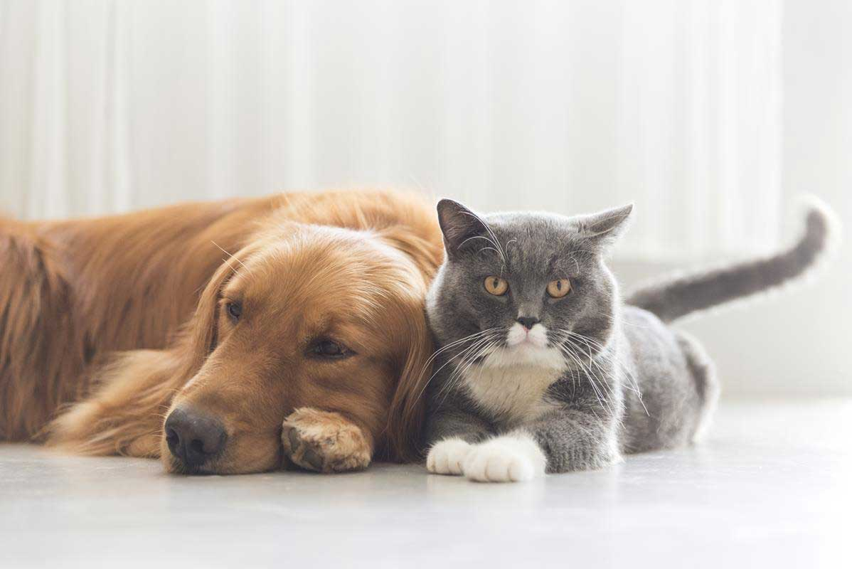 about our veterinary practice  Tupelo, MS
